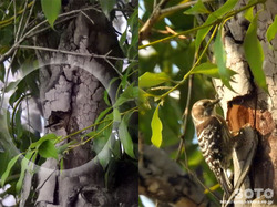 泗水 桜並木(野鳥の巣穴)