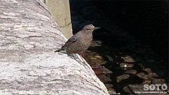 三角西港(野鳥)