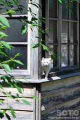 NAMIKI(猫)