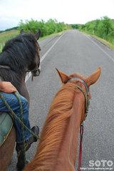 乗馬体験(1)