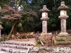鹿(春日大社)
