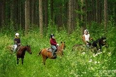 乗馬体験(2)