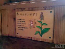 木下小屋(7)