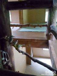 木下小屋(9)