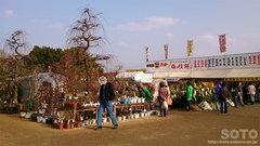 くまもと春の植木市2014(1)
