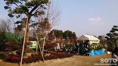 くまもと春の植木市2014(2)