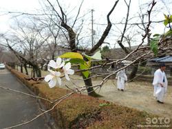 菊池秋祭り2016(19)