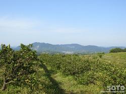 池田農園収穫祭(5)