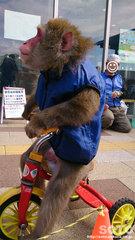 猿まわし(2)
