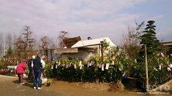 くまもと春の植木市(2)