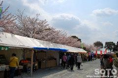 久留米つつじ祭2012-2
