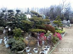 くまもと春の植木市2012(1)