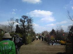くまもと春の植木市2011