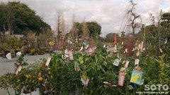 久留米植木まつり