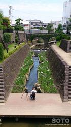 高瀬川花菖蒲(3)