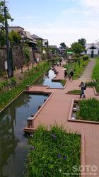 高瀬川花菖蒲(4)