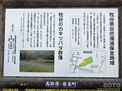牧谷カキツバタ(2)
