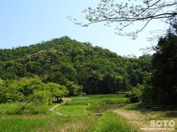 牧谷カキツバタ(6)