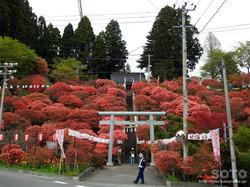 七戸 天王神社つつじ祭(1)