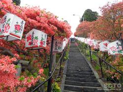 七戸 天王神社つつじ祭(4)