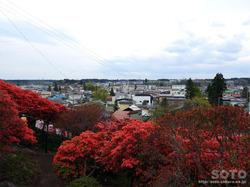 七戸 天王神社つつじ祭(7)