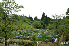 花しょうぶ祭り(遠景)