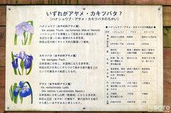 花しょうぶ祭り(看板)