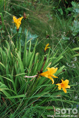 オロンコ岩に咲く花(7)