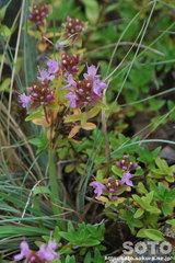 オロンコ岩に咲く花(2)