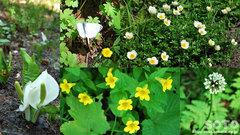 高原温泉沼めぐり(花2)