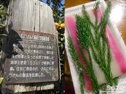崎津集落(杉ようかん)