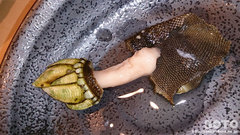神楽寿司(亀の手2)