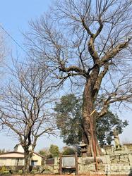 菊池則隆公墓(1)