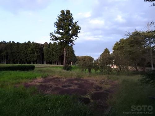 多賀城跡(15)