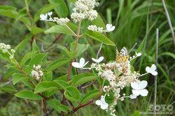 ポー川史跡自然公園(花と蝶)