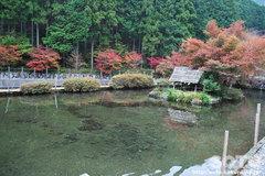 つつじの里 荒滝(2)