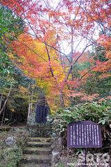 北畠氏館跡庭園(14)