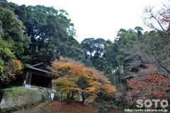 臼杵磨崖仏(10)