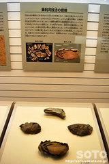 ピリカ旧石器文化館(5)