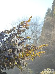 冬景色(1)