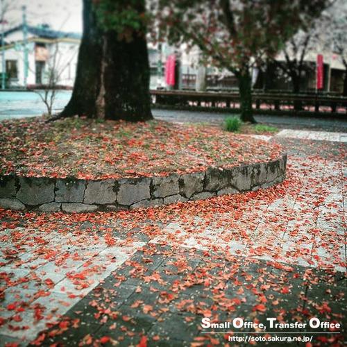 常緑樹の落葉