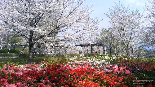 菊池運動公園(4)