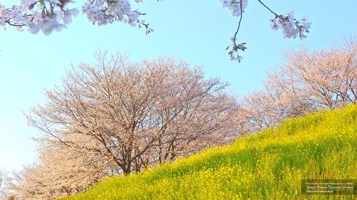 菊池運動公園(1)