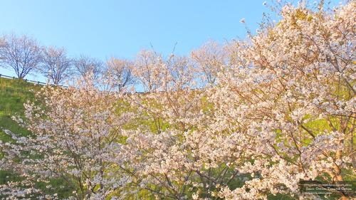 菊池運動公園(2)