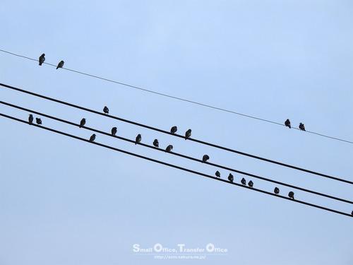 電線に野鳥
