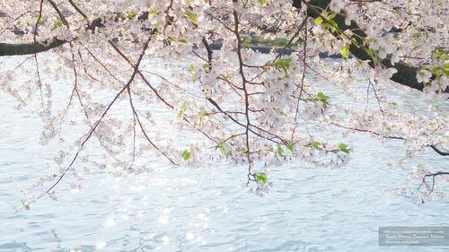 弘前城3(青森県)