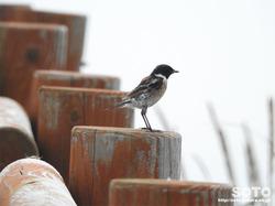 霧多布岬(野鳥)