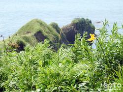 アゼチの岬(3)