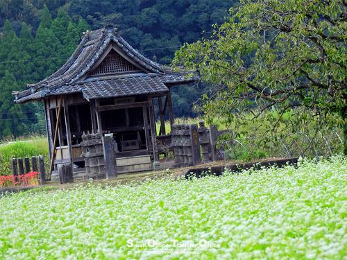 蕎麦の花とお堂