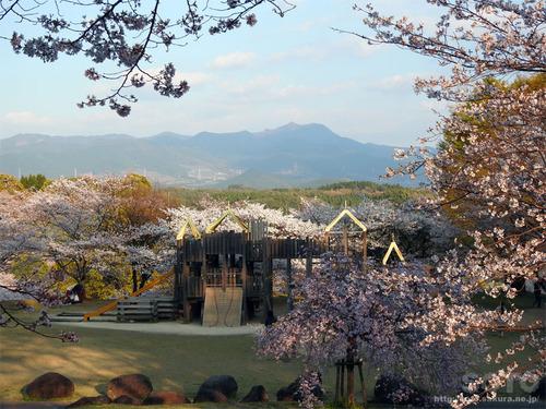菊池の桜(2019/04/05-5)